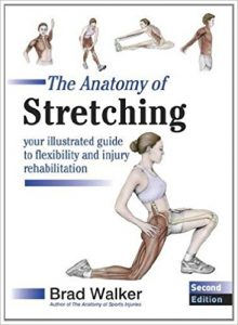 anatomy stretching physiotherapy